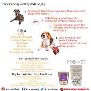 23+ Daur hidup hewan anjing dan nyamuk terupdate