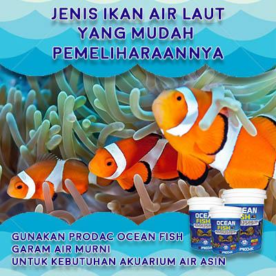 51 Gambar Hewan Laut Mudah HD Terbaik