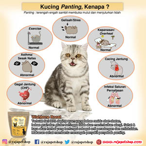 Kucing Panting Kenapa Ya Raja Petshop
