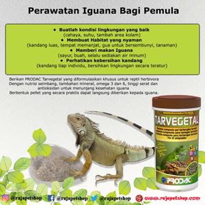 Perawatan Iguana Bagi Pemula Raja Petshop