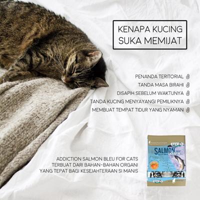 Tahukah Anda Kenapa Kucing Suka Memijat Raja Petshop