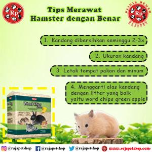 Tips Cara Merawat Kandang Hamster Dengan Baik Dan Benar Raja Petshop